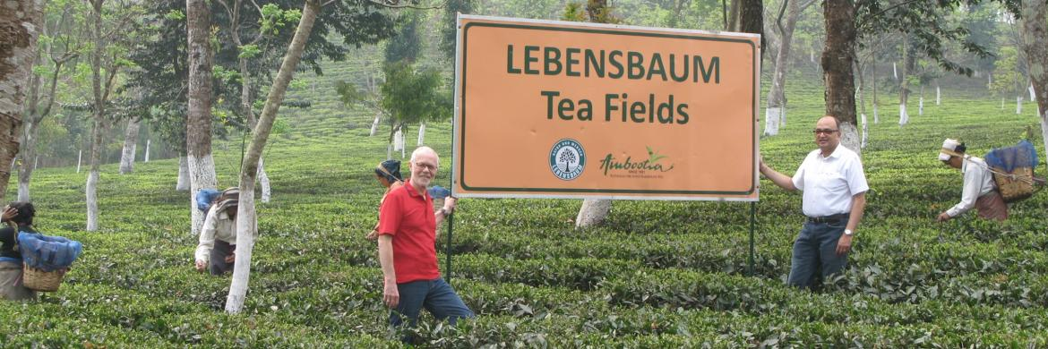 LB Tea Fields